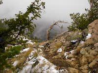 Gobblers Knob (Bowman Fork Trail)