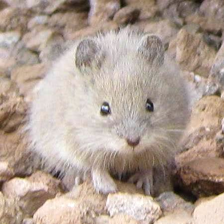 Mountaineering mouse?