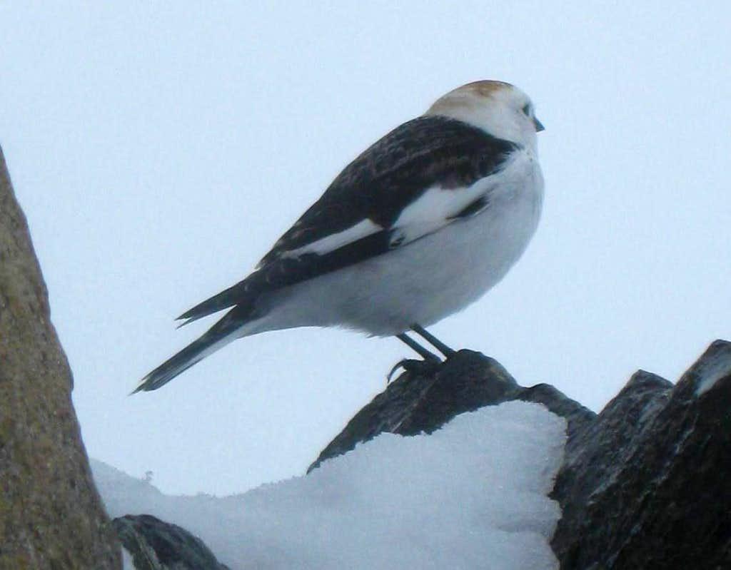 Wildlife on Ben Nevis