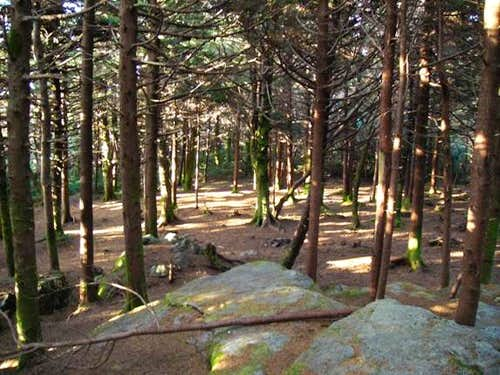 Summit Grove