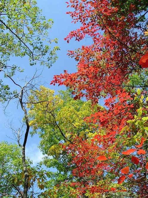 Leaves Turn Red on Waonaze
