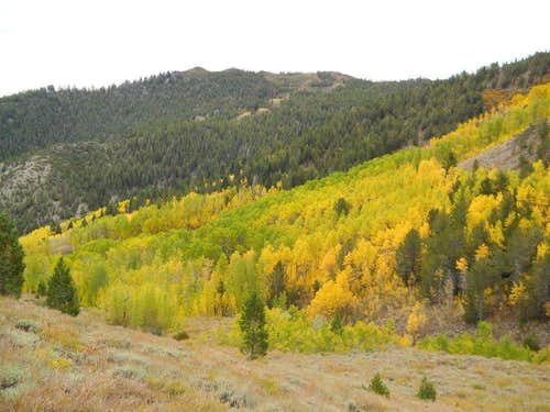 Fall colors in the Mount Rose Wilderness