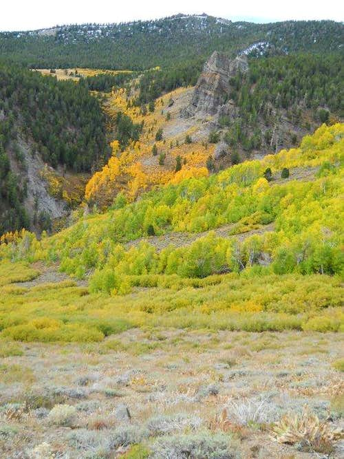 View down the Thomas Creek Canyon. Fall colors in bloom.