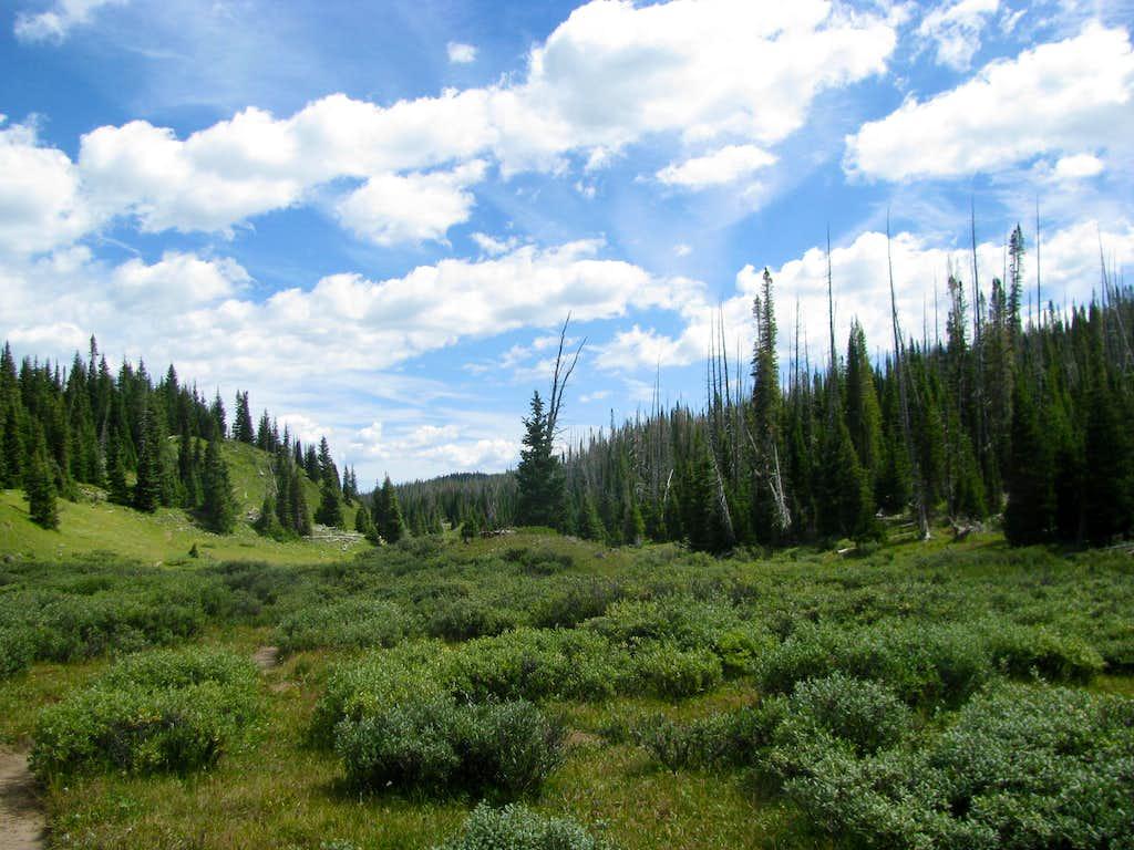 Woods btw Reservoir and Saddle