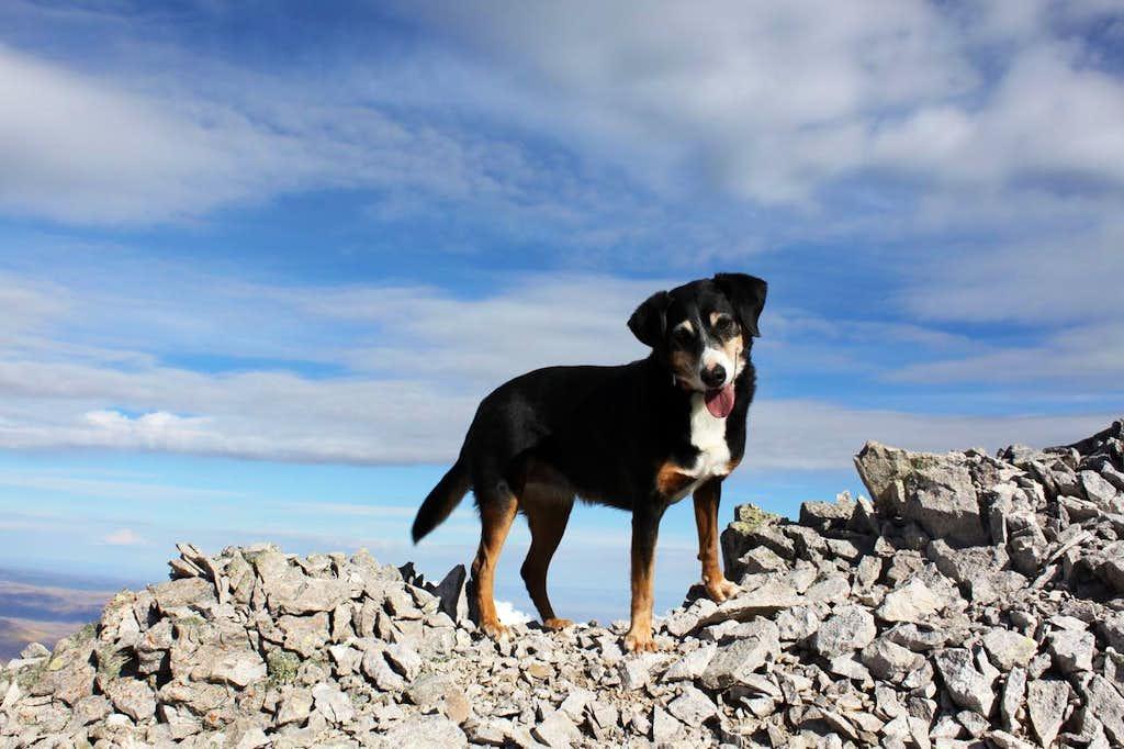 My best hiking buddy