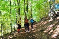 Forest above Zirovnica