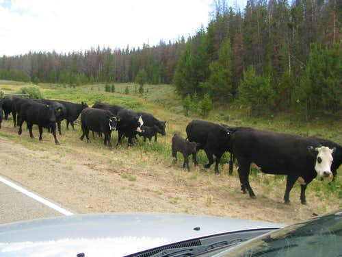 Traffic Jam near Gore Pass