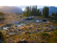 Alpine above Esther Lake