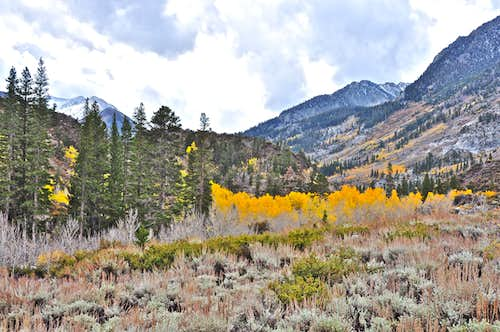 Colors along Bishop Creek