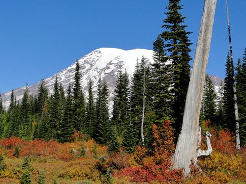 Mt. Rainier and fall colors on trail to Bench Lake.