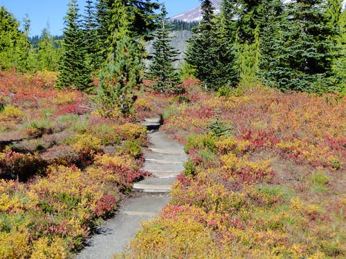 Fall colors on trail to Bench Lake.