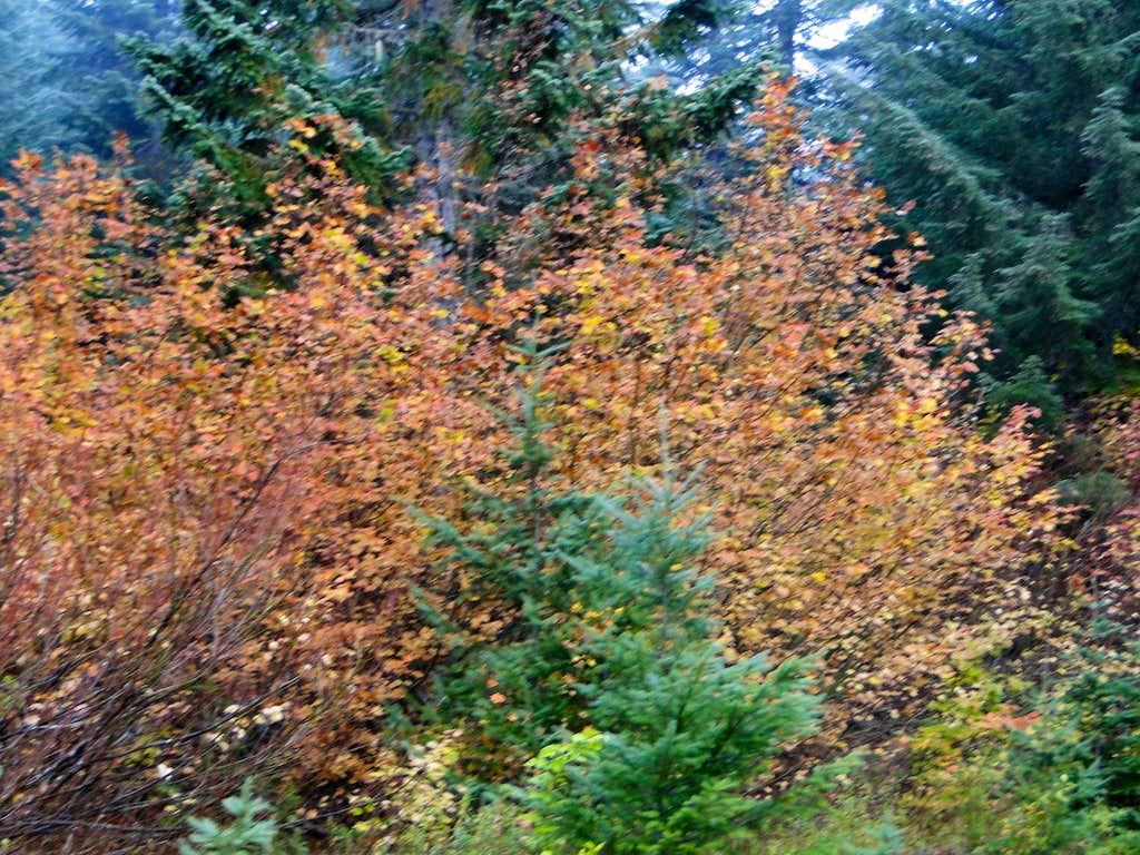 Fall in Kendall Peak Lakes area.