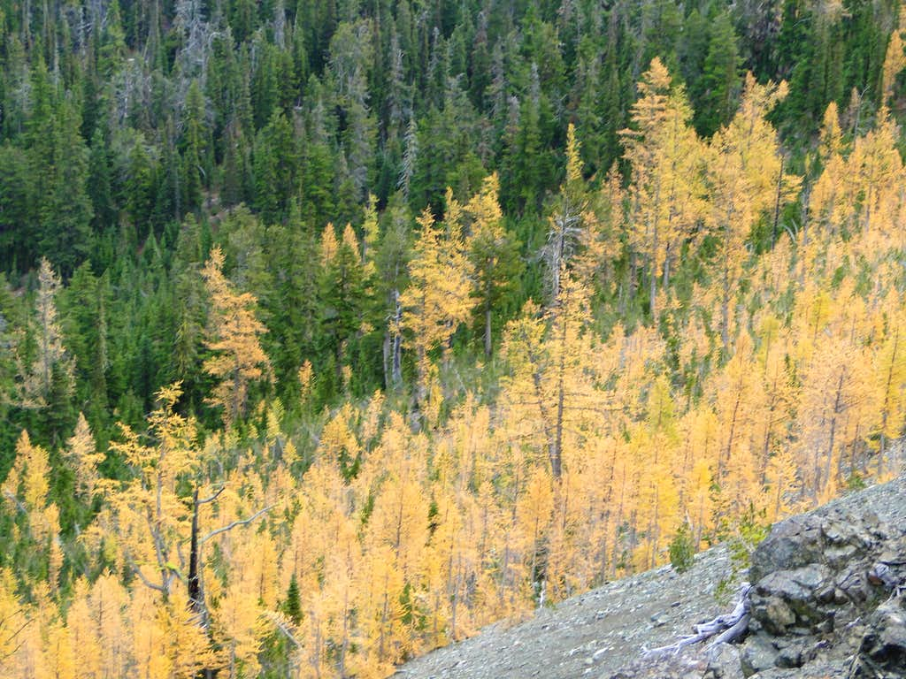 Fall at Longs Pass.