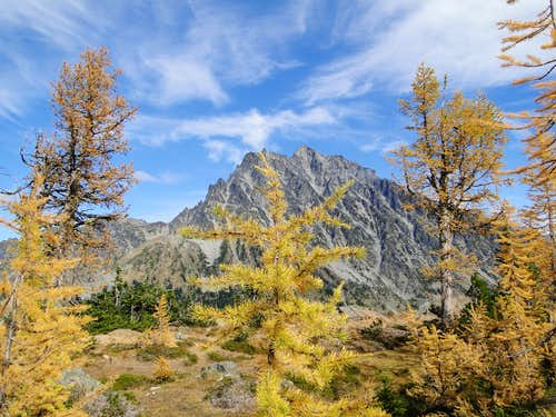Larches and Mt. Stuart from near Ingalls Pass.