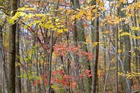 Fall Trail Foliage
