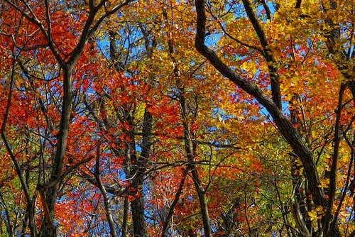 Deep Creek Vista Trail