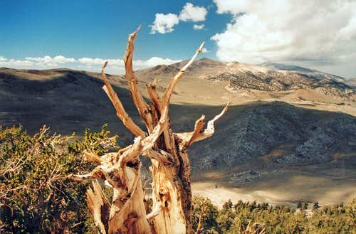 Bristlecone pine view north, Blanco Mtn.
