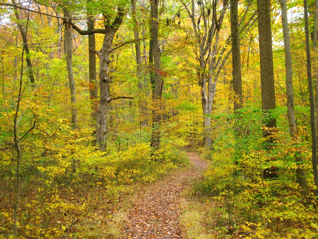 A colorful walk in the woods