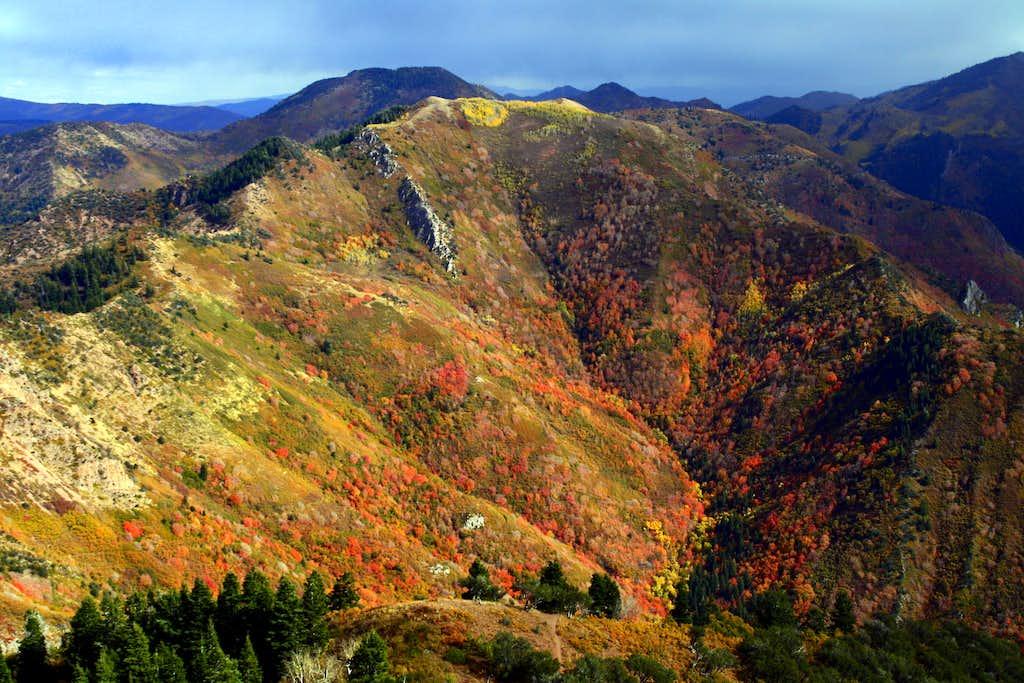 Fall Colors on Church Fork Peak