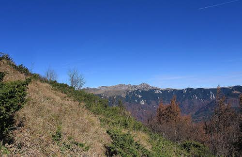 Ciucaş