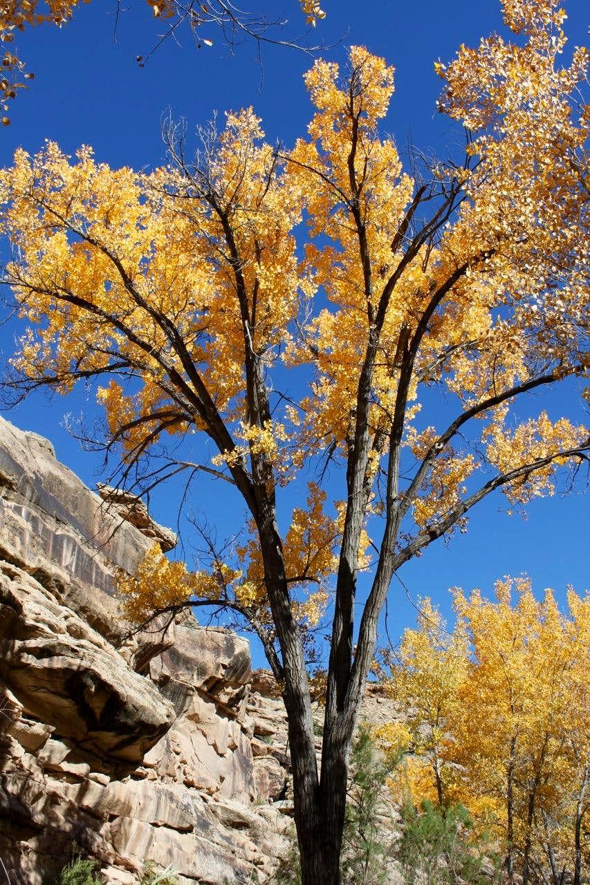 Autumn in Unaweep