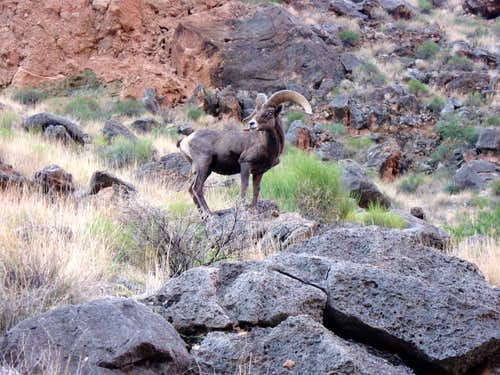 Bighorn between Toltec and Garnet