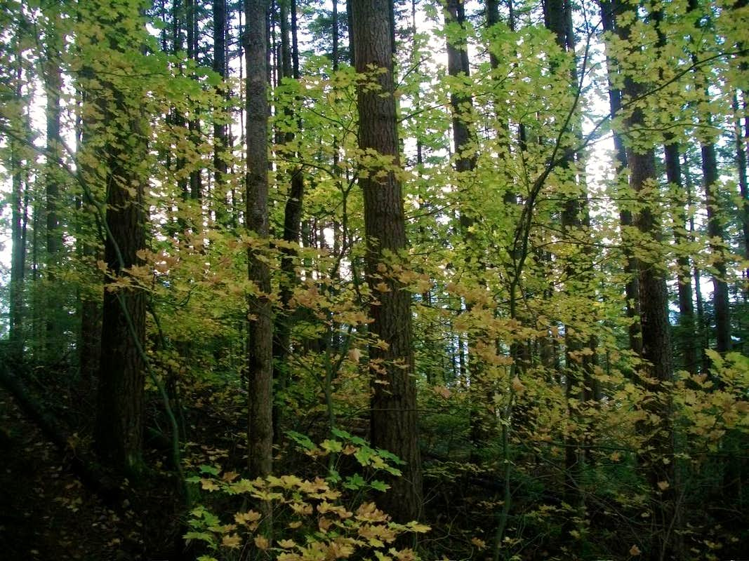 pacific northwest forest -#main