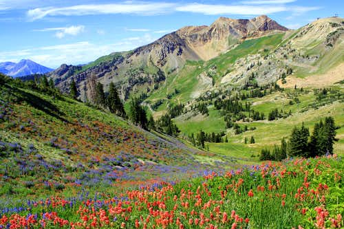 The American Fork Twins and a Field of Colors
