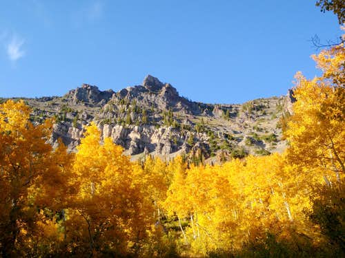 Yellow Aspens below Devil\'s Castle