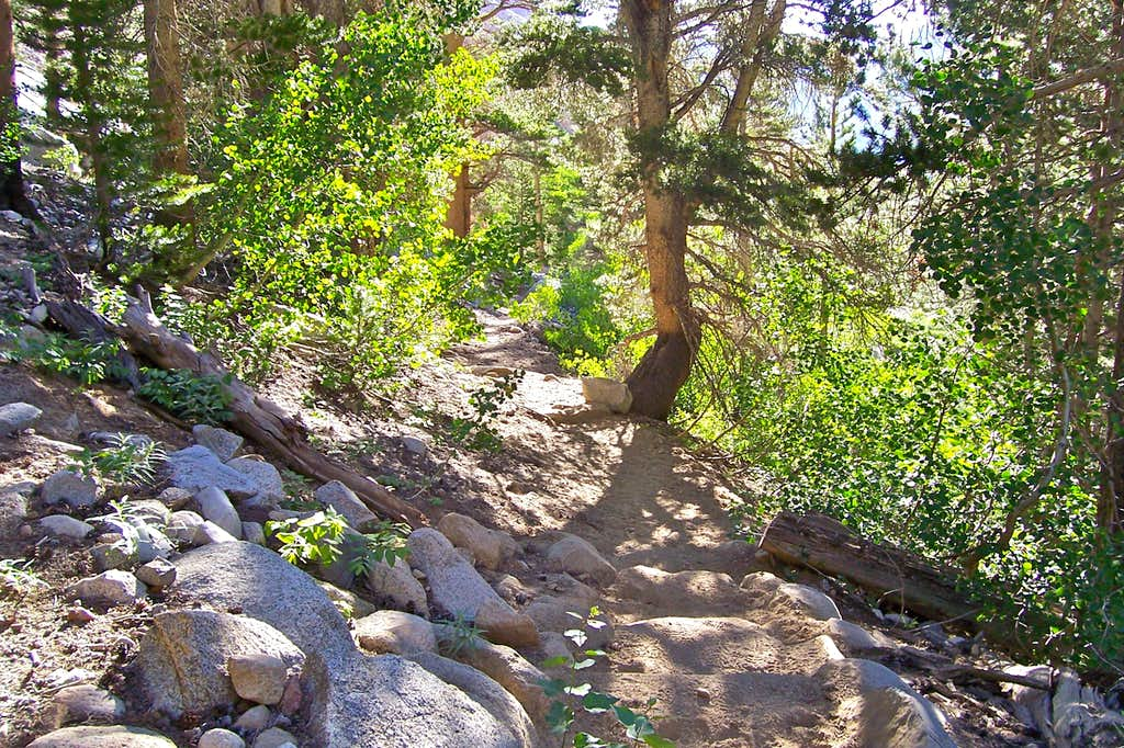 Section of the trail