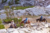 Hiking horses and mules