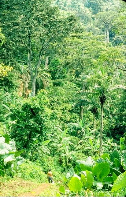 Typical tropical forest of...