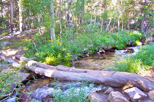 Log over North Fork of Bishop Creek