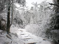 Mitchell trail ~6500 ft.