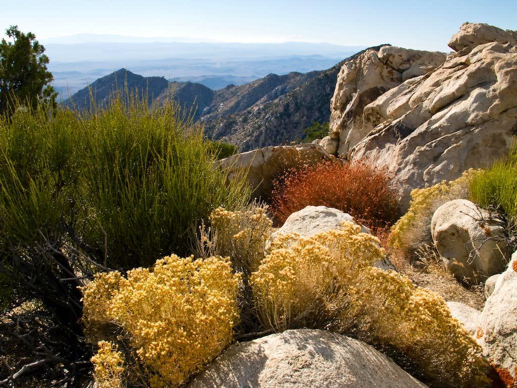 Colorful vegetation on Granite Mountain