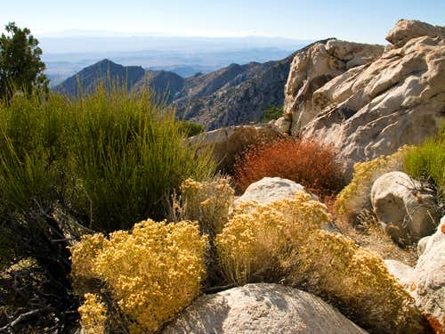 Colorful vegetation on Granite Mountain