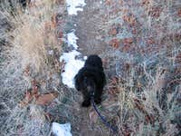 My hiking buddy,Nibs