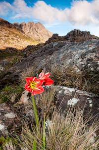 Hippeastrum morelianum and agulhas negras peak