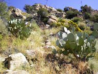 Prickly Pear & Outcrops