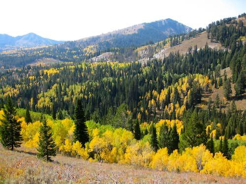 Bloomington Peak