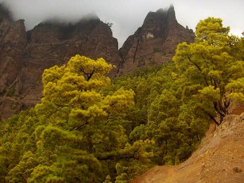 Pine trees in Caldera de Taburiente