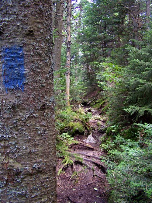 Blue Blaze Along Skylight Pond Trail