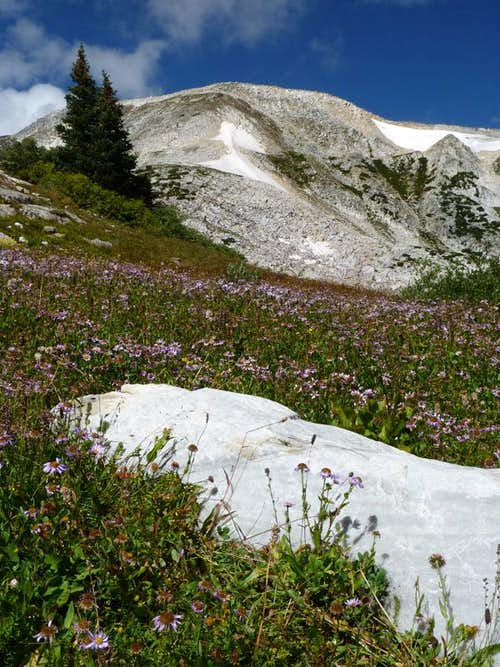Flowers and Medicine Bow Peak