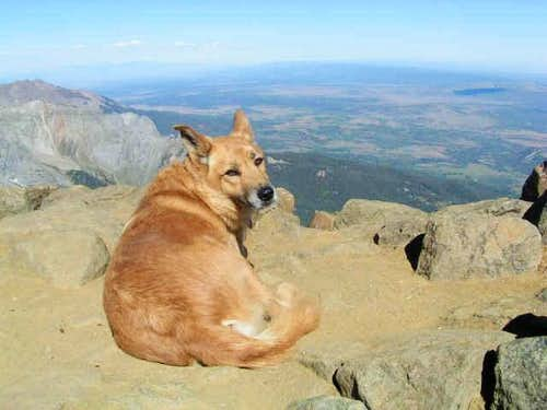 Molly the mountain mutt on...