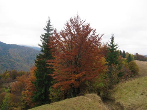 mixed forest in October