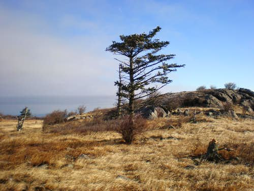 Lonely tree - Grayson Highlands