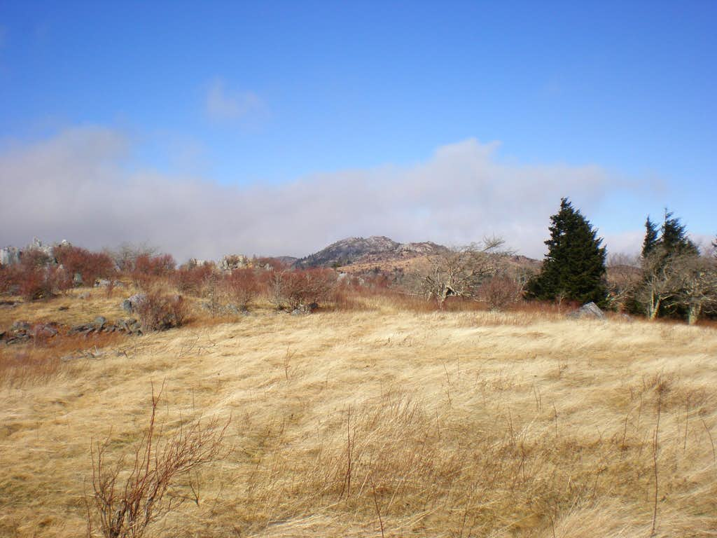 Wilburn Ridge framed above a high meadow