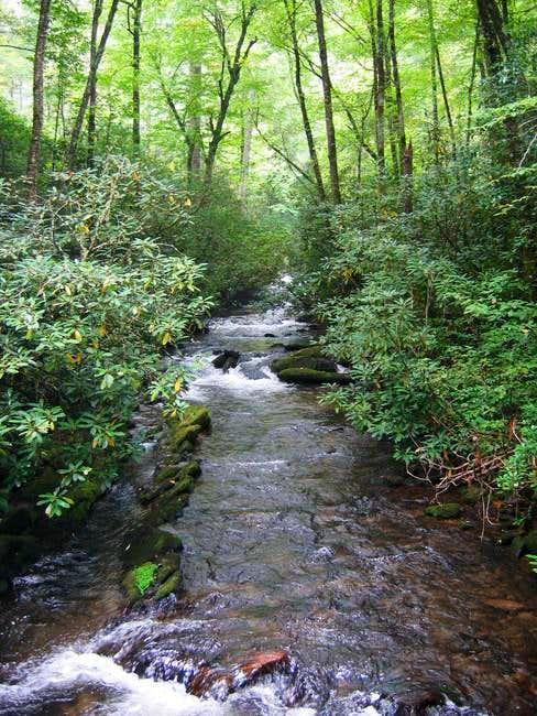 Caldwell Fork, at the base of...