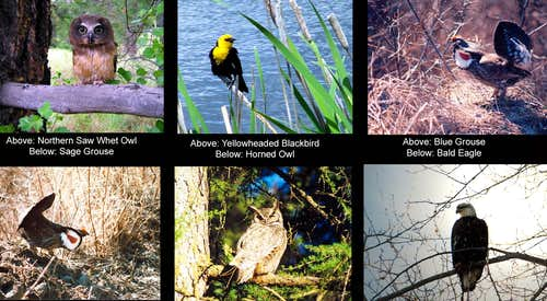 Birds of the Kettle River range