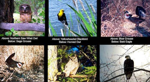 Birds of the Kettle River range